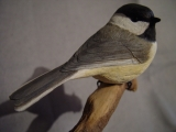 Perching Chicadee Finished